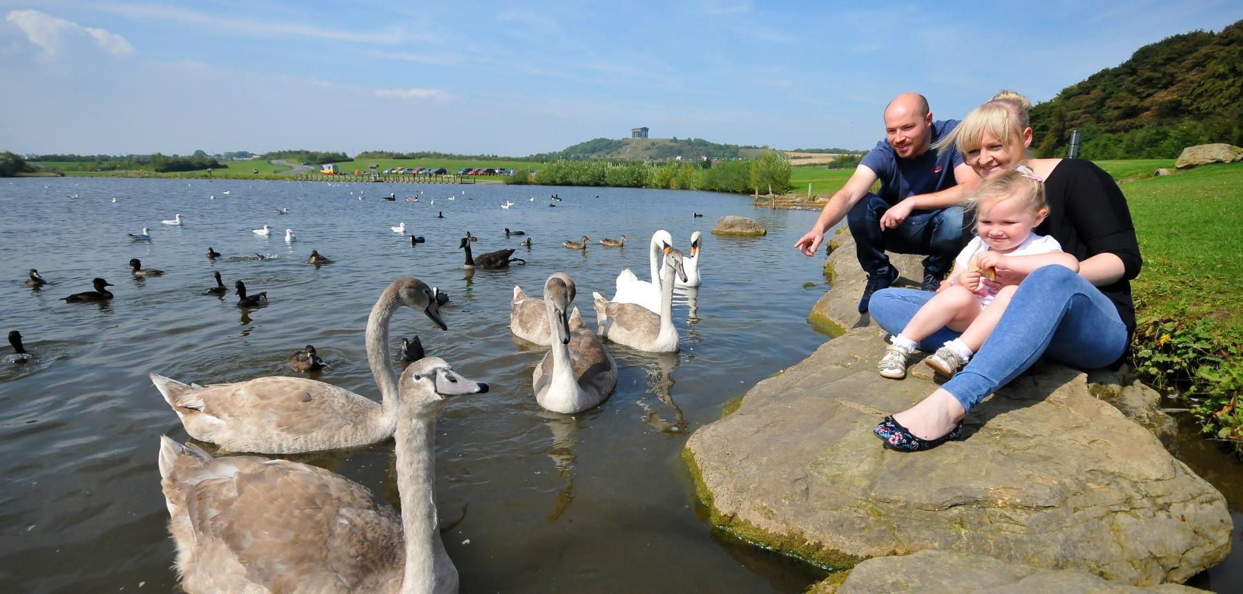 Family feeding swans at Herrington Country Park